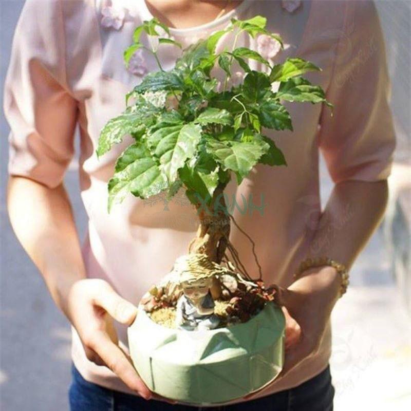 Chăm sóc cây hạnh phúc