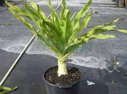 Cách trồng và chăm sóc cây